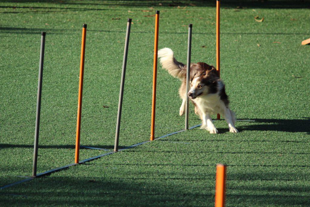 Equipamiento para perros